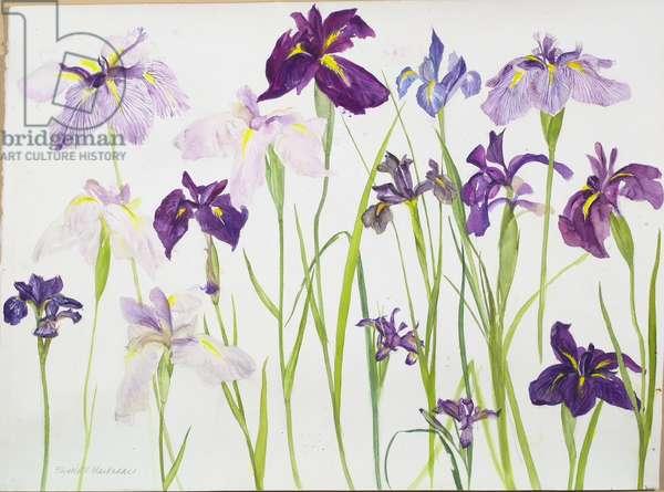 Purple Irises (w/c on paper)