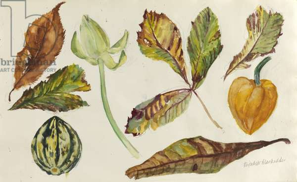 Leaves, Melon and Gourd (w/c on paper)