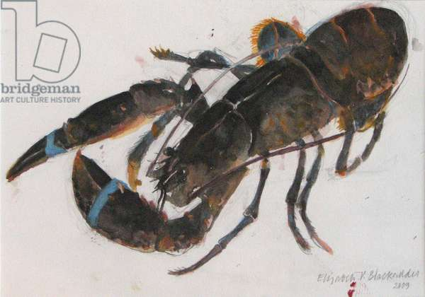 Lobster, 2009 (w/c on paper)