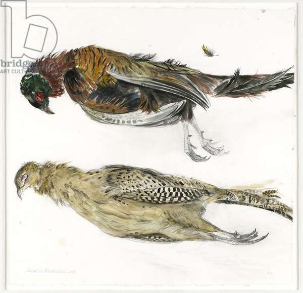 Two Pheasants, 2008 (w/c on paper)