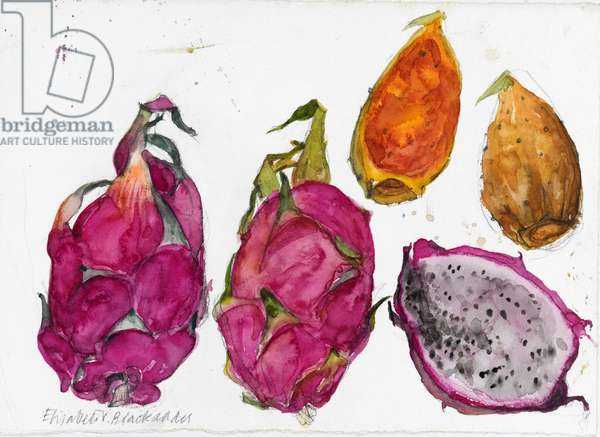 Dragonfruit (w/c on paper)