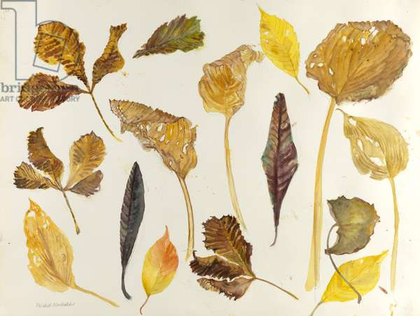 Pavement Leaves (w/c on paper)