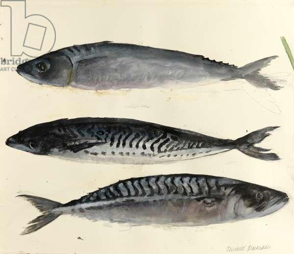 Three Fish (w/c on paper)