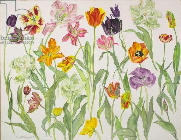 Tulips II, 2008 (w/c on paper)