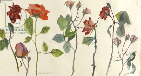 Roses (w/c on paper)