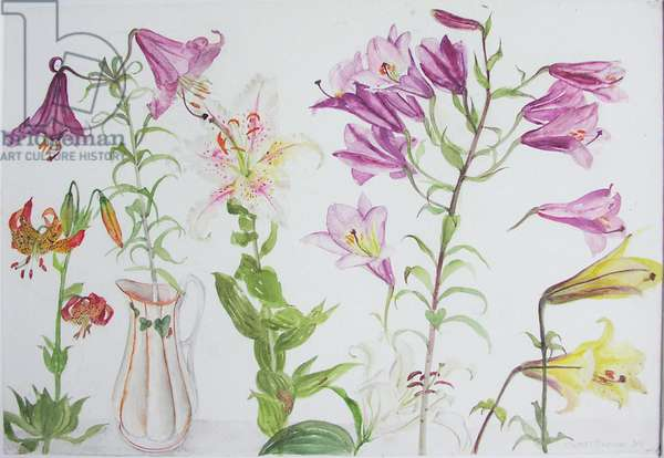 Mixed Irises, 2004 (w/c on paper)