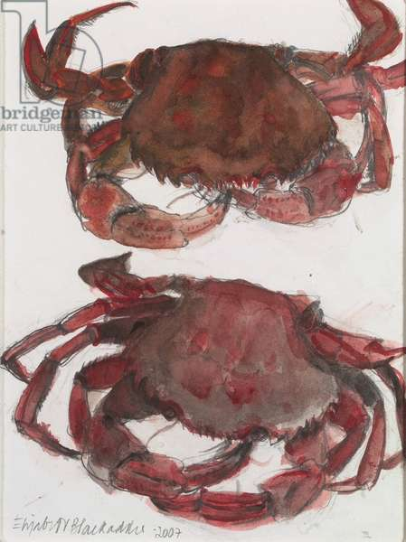 Two Swimming Crabs, 2007 (w/c on paper)