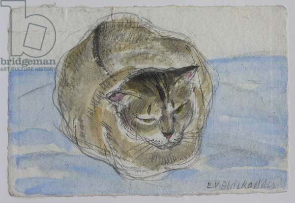 Rosie - Abyssinian Cat, 2004 (pencil & w/c on paper)