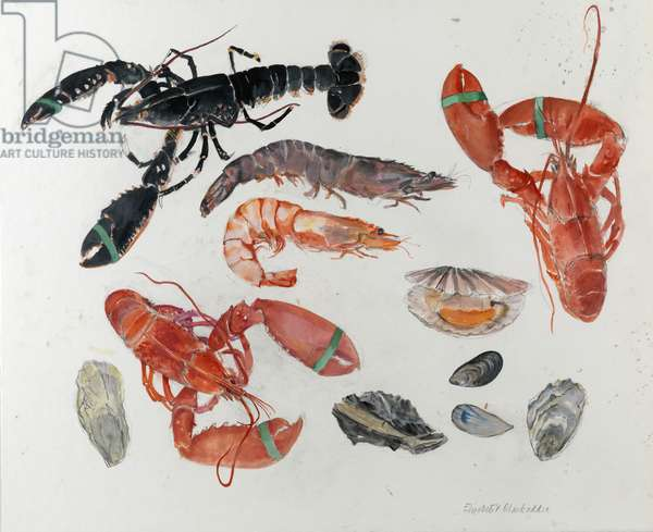 Lobsters with Shrimps, Mussels, Oysters and Scallop (w/c on paper)