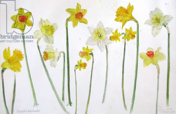 Daffodils (w/c on paper)