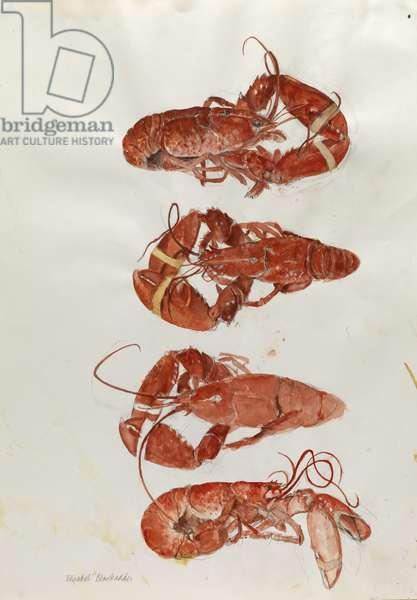Lobsters (w/c)