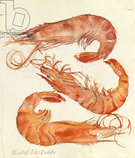 Three Prawns (w/c on paper)