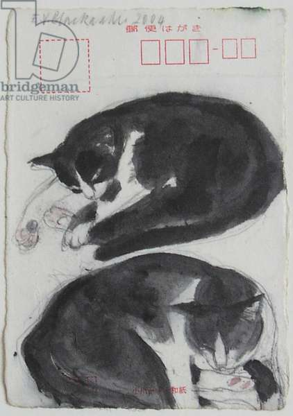 Black and White Cat (Fred), 2004 (w/c on paper)