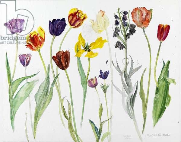 Mixed Tulips II (w/c on paper)