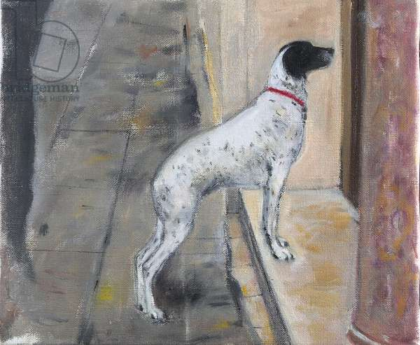 Venetian Dog, 2008 (w/c on paper)