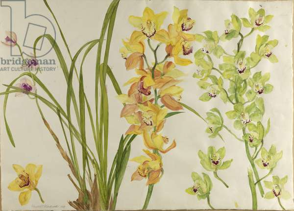 Orchids, 1999 (w/c on paper)