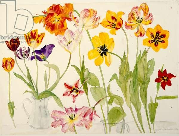 Tulips (w/c on paper)