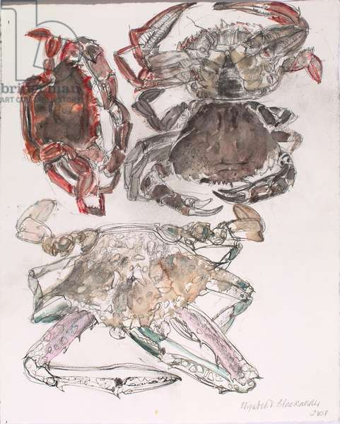 Swimming Crabs, and a Blue Crab, 2008 (w/c on paper)
