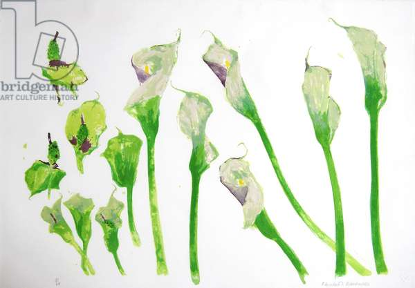 Arum Lilies (colour litho)