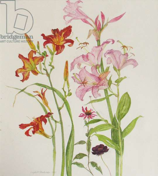 Day Lilies (w/c on paper)