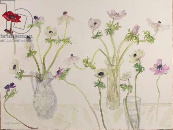 Pale Anemones, 2008 (w/c on paper)