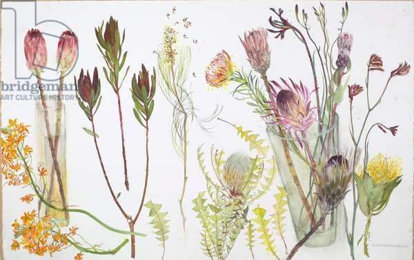 Proteus and Other Plants (w/c on paper)