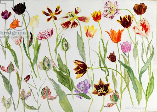 Mainly Tulips, 2009 (w/c on paper)