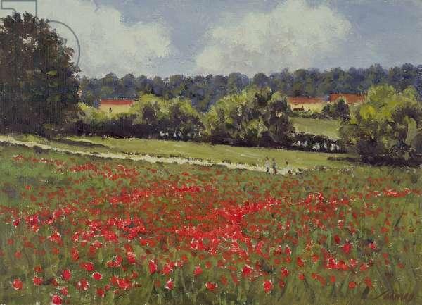 Summer Fields (oil on canvas)