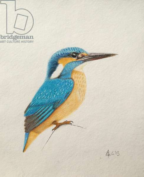 Kingfisher, 2013, (watercolour paint and pencil)