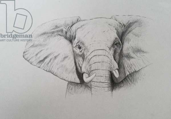 Elephant, 2011 (watercolour paint and pencil)