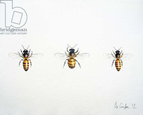 Three Bees, 2012 (watercolour paint and pencil)