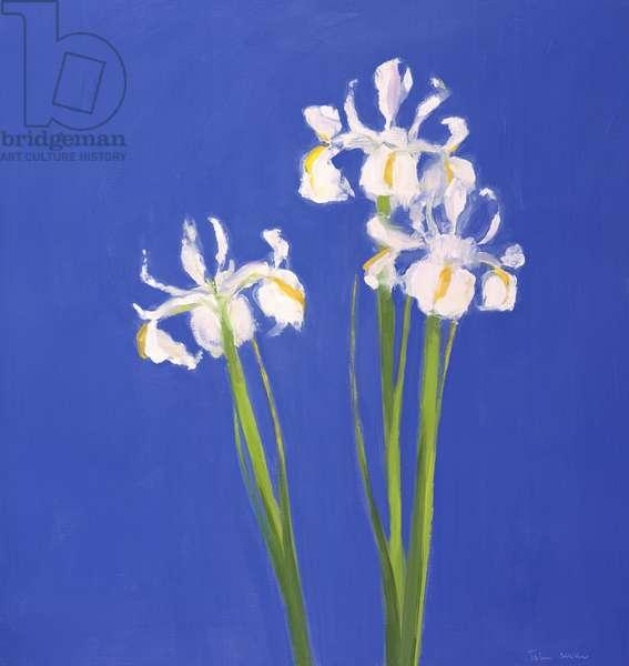 Dutch White Exelsior, 2000 (oil on canvas)