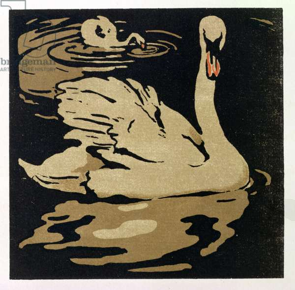 The Beautiful Swan, illustration from 'The Square Book of Animals', published by William Heinemann, 1899 (hand-coloured woodblock print)