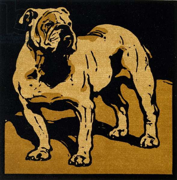 The British Bull-Dog, from 'The Square Book of Animals', published by William Heinemann, 1899 (hand-coloured woodcut)