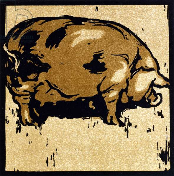 The Learned Pig, from 'The Square Book of Animals', published by William Heinemann, 1899 (hand-coloured woodcut)