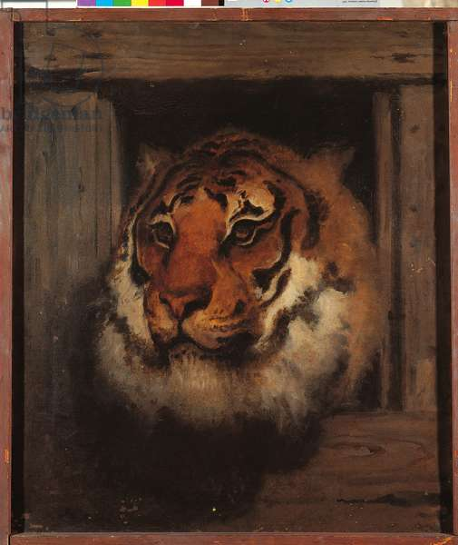 Head of Tiger, c.1860-65 (oil on canvas)