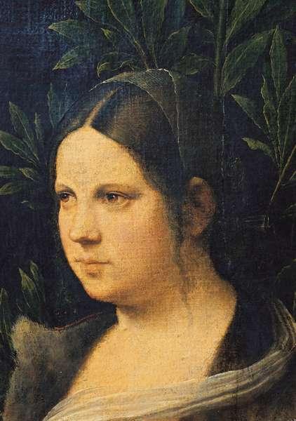 Portrait of a young woman - Laura (Ritratto di giovane donna - Laura), by Giorgio da Castelfranco known as Giorgione, 1506, 16th Century, oil on canvas glued on board, 41 x 34 cm