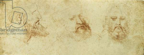 Study of a male head, 1502 (red chalk on paper)