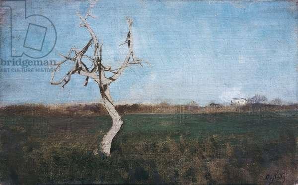 The Bare Tree (L'alberello spoglio), by Giuseppe De Nittis, 1866-1867, 19th Century, oil on canvas, 11 x 17 cm