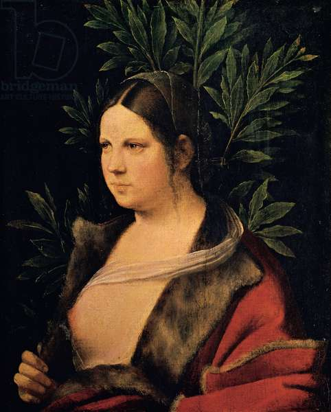 Portrait of a Young Woman (Laura), 1506 (oil on canvas pasted on panel)