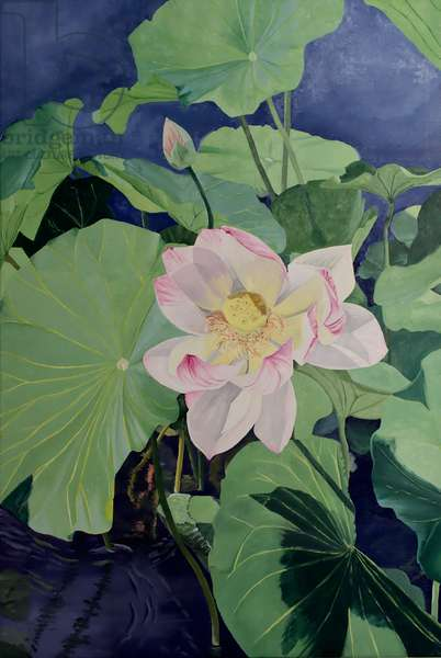 Sacred Lotus I (Nelumbo Nucifera)