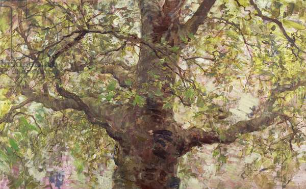 Up Into a Plane Tree, 2006 (temperaand oil on panel)