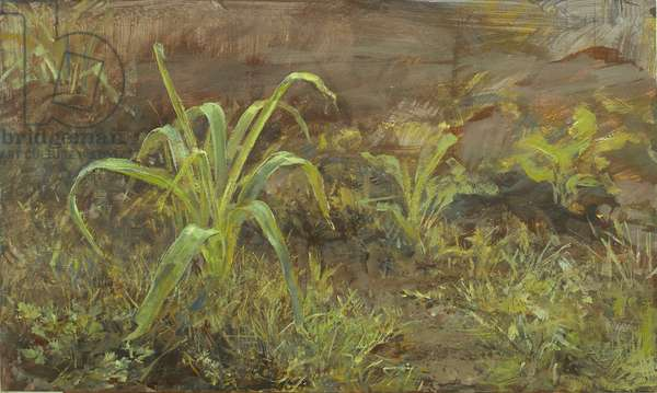 Young Allium, 2006 (temperaand oil on panel)