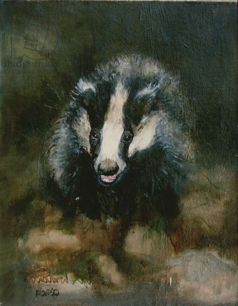 Badger Watching (oil on board)