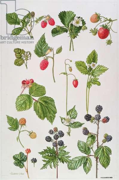 Strawberries, Raspberries and other edible berries (w/c)