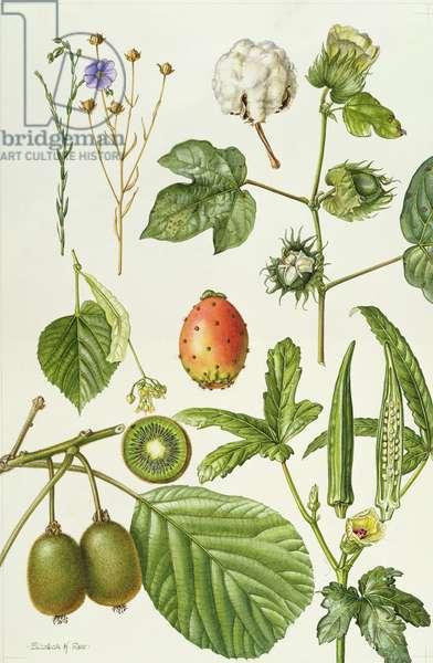 Kiwi fruit and other plants (w/c)