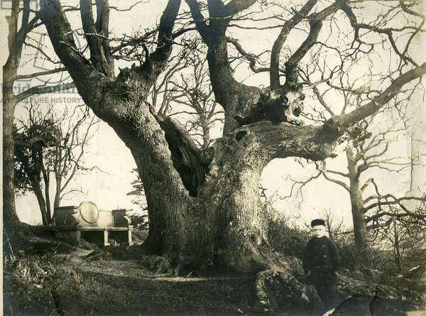 'The Wilberforce Oak Tree and Bench', 1924 (sepia print)