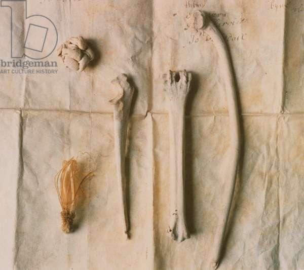 Bones on Manuscript
