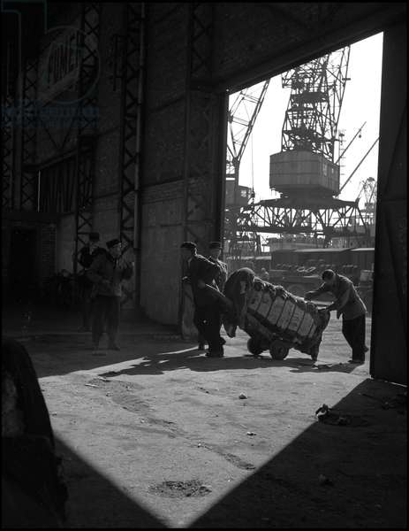 Plan Marshall or European Recovery Program (ERP) (1948-1952): unloading in the port of Dunkirk of a cotton shipment supplied by the Marshall Plan and destined for mills in northern France. Photography around 1950.