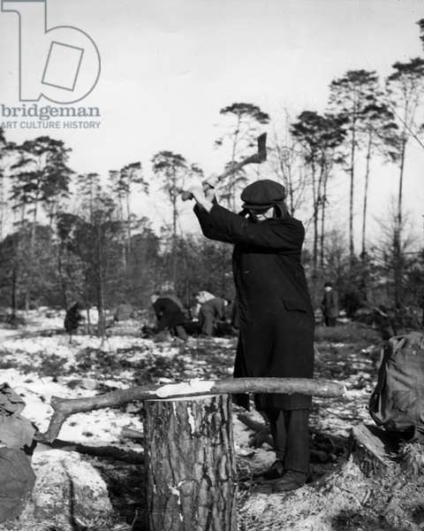 Second World War (1939-1945): Berlin Dahlem (Germany) January 20, 1946: In the Grunewald forest, fighting against the cold, a Berlin man cuts wood to heat himself under the supervision of the American Military Government.